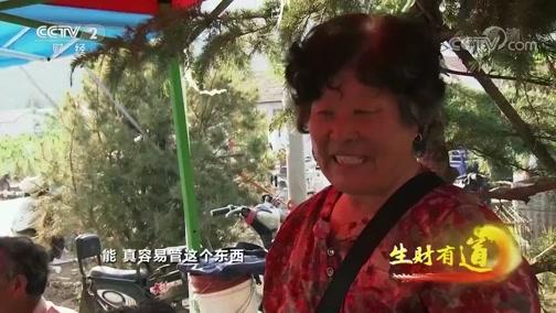 《生财有道》 20200601 山东临沂临港区:樱桃是宝 振兴老区效果好