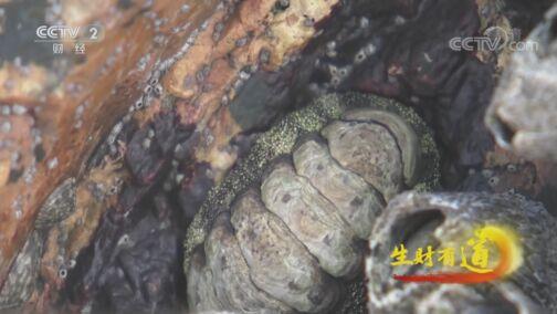 《生财有道》 20200730 生态中国沿海行——福建福鼎:美丽海岛宝贝多