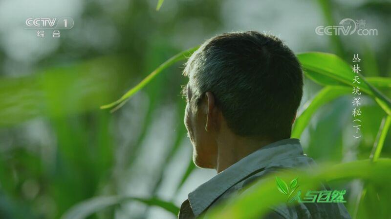 《人与自然》 20200910 丛林天坑探秘(下)