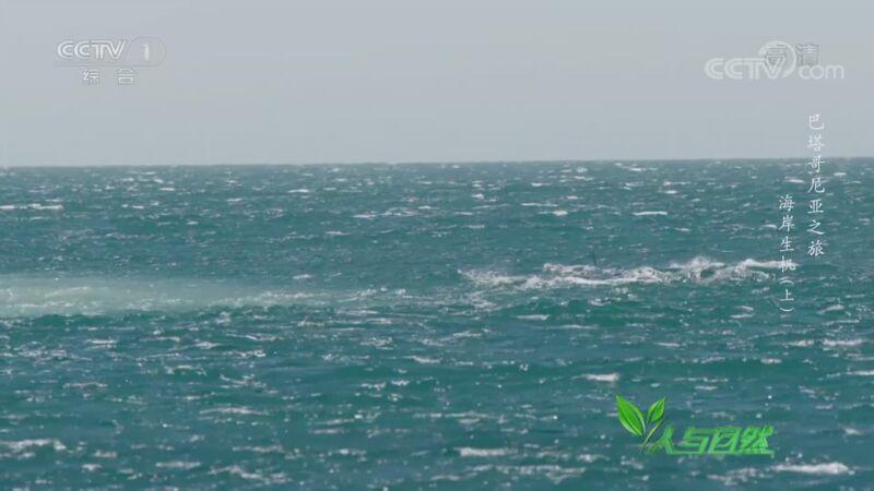 《人与自然》 20201017 巴塔哥尼亚之旅——海岸生机(上)