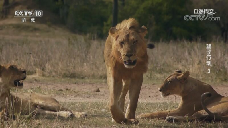 《自然传奇》 20201021 狮子行动 3