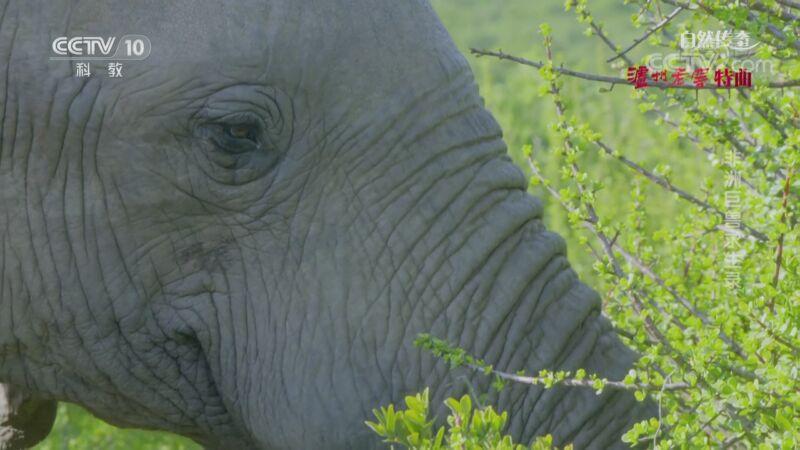 《自然传奇》 20201109 非洲巨兽求生录