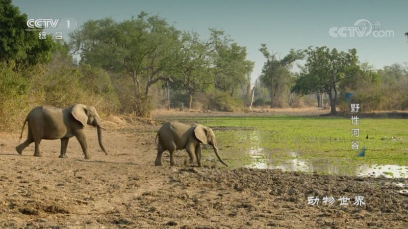 《动物世界》 20201113 野性河谷