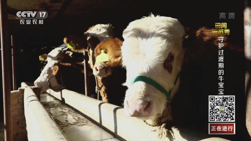 《田间示范秀》 20210107 守护过渡期的牛宝宝
