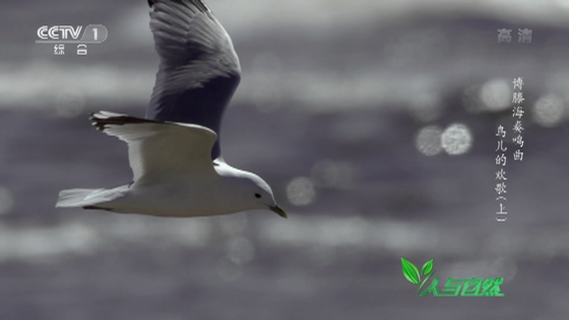 《人与自然》 20210215 博滕海奏鸣曲——鸟儿的欢歌(上)