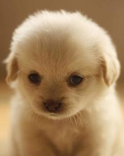 BBC/CCTV纪录片《萌犬秘闻.Secret Life of Dogs.2013》