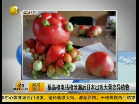 福岛核电站核泄漏后 日本出现大量变异植物