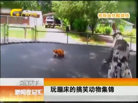 XM专题策划_爱玩儿蹦床的动物们 00:00:48