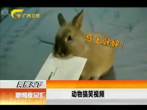 XM专题策划_养只宠物胜保姆,按摩专业包撕信纸 00:01:06