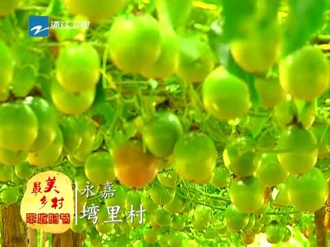 [浙江新闻联播]特别策划 到最美乡村 享受丰收时节 20131129