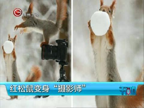 """红松鼠变身""""摄影师"""""""