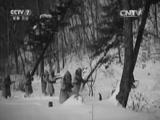 《中国武警》 20150927 中国武警特别节目之林海守护