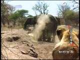 动物世界 荒原上的传奇(二)