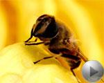 3.神奇的蜂王浆
