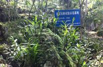 贵州赤水,金钗石斛种植基地