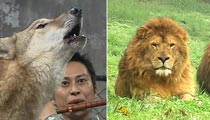 狼和人唱歌后 凶猛野兽如何引爆惊人财富