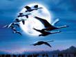 鸟的迁徙<IMG hspace=3 src=http://news.cctv.com/Library/news20080318/css/img/video_b.gif align=absMiddle vspace=3 border=0>