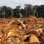 Deforestation declines
