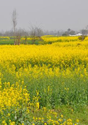 <h5>Spring scenery in Mianzhu, Sichuan</h5>