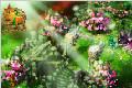 《奇门》游戏图片3