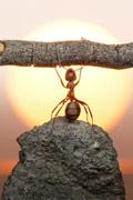 微距镜头下蚂蚁的童话世界