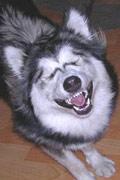 动物们超萌的憨笑表情