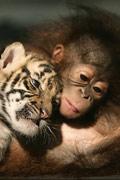 动物的友谊:为什么有些情感跨越种族