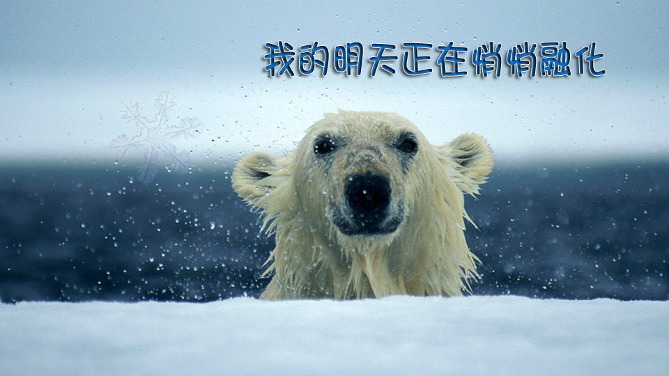 这是一个让人揪心又感伤的北极熊图片故事,希望你看过之后,能开始低碳