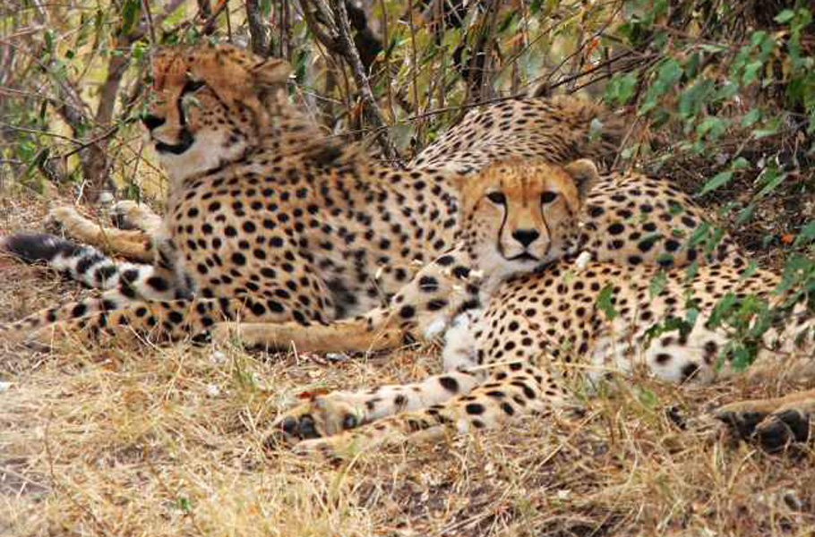 东非野生动物大迁徙__cntv新闻台