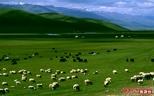 新疆草原摄影之旅