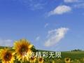 网友原创《中国央视网,春晚大舞台》