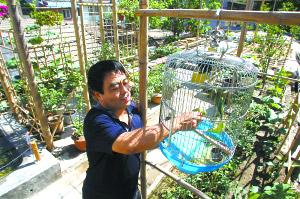 张贵春和他的空中菜园