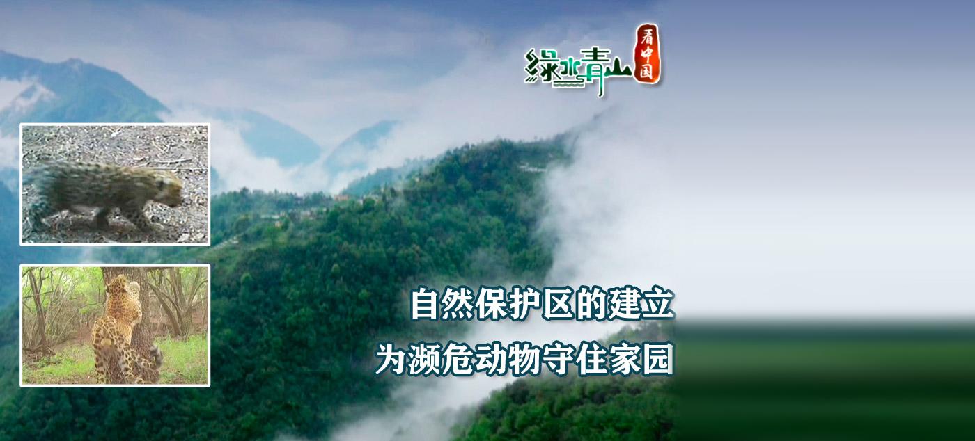 舌尖上的中国1直播_央视网_世界就在眼前