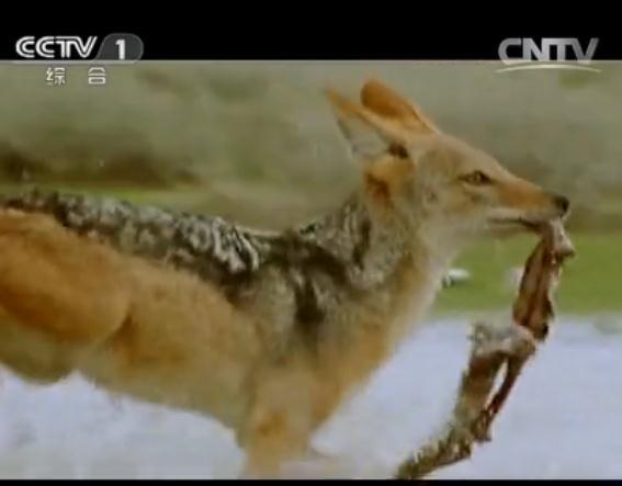 《动物世界》成长的烦恼(三)