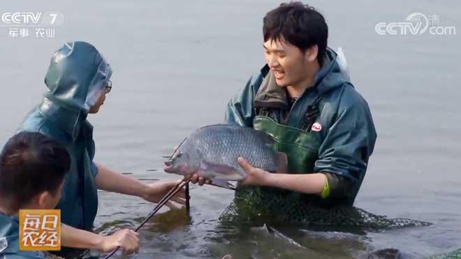 [每日农经]瘦身的鱼成为市场新宠 20190325