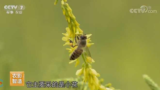 [每日农经]土蜂蜜酿出好生活 20190712