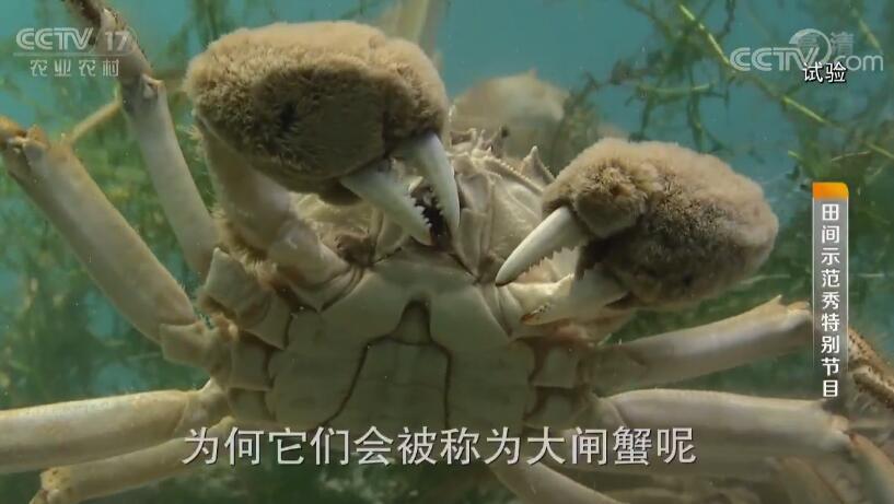 """《田间示范秀》 20190808 """"螃蟹思维""""下的王俊农场"""