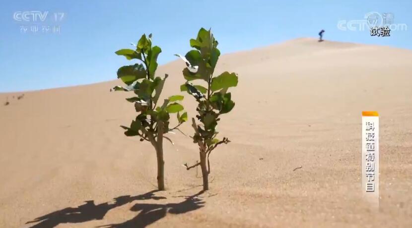 《科技链》 20190807 沙漠里的绿智慧