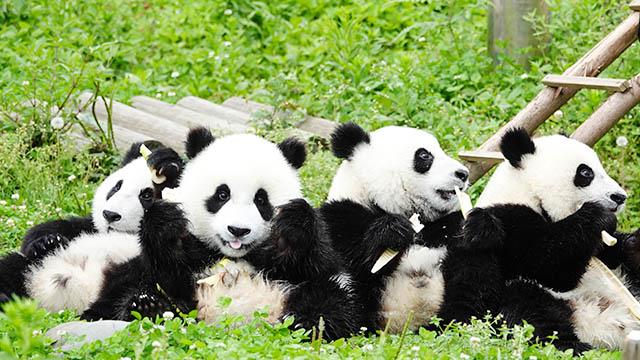 野生動植物保護十件大事揭曉