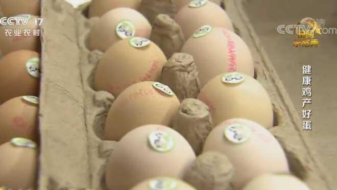 《田间示范秀》 20200605 健康鸡产好蛋