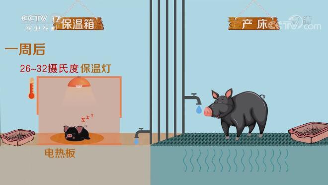《田间示范秀》 20200805 藏香小猪保卫战