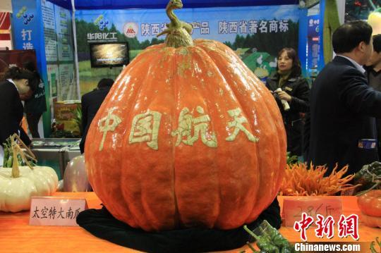 """杨凌农高会展区内的""""南瓜王""""。 记者 张一辰 摄"""