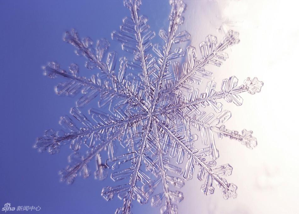 春天飘着雪花图片