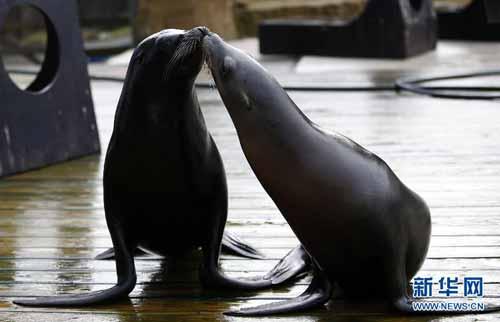 惠普斯奈德动物园:动物们的圣诞聚会