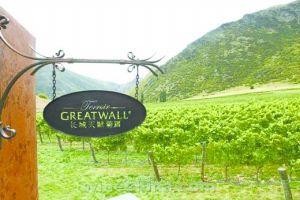长城葡萄园崇尚自然、强调原味。