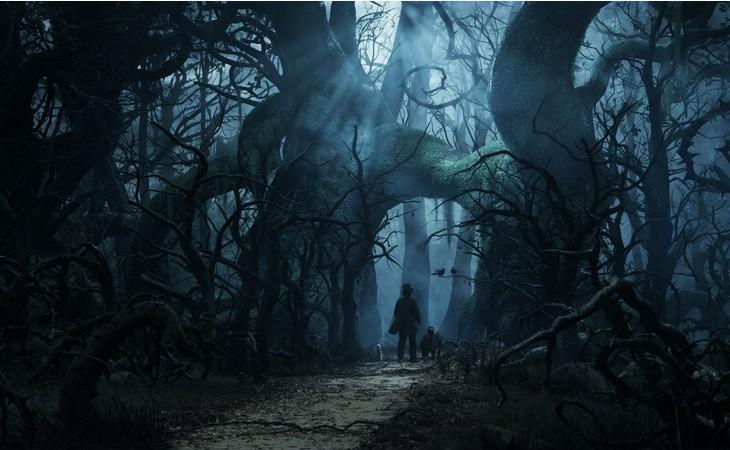 奥兹国魔境的夜晚