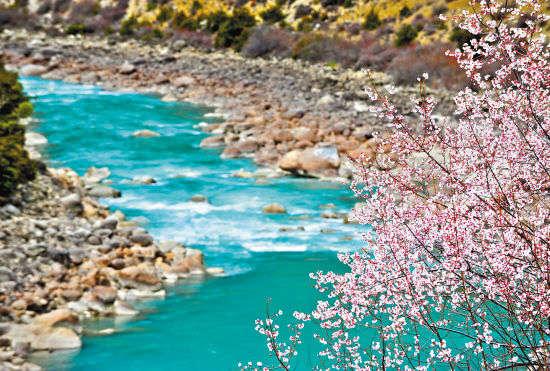 川藏公路旁的尼洋河边,桃花盛开