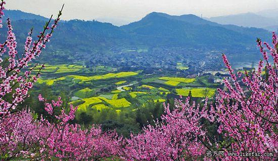 高椅古村被粉红的桃花、黄色的油菜花簇拥着 作者:李云防