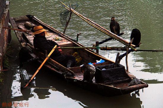 渔民和他的捕鱼高手