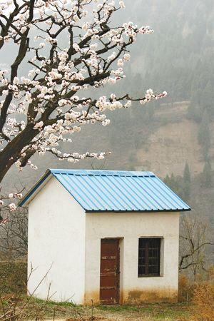 百花将谢杏花新 清明节寻最迷人的杏花村